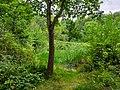 Stokes Field Pond.jpg