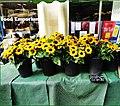 Stroud ... flores amarillas.jpg