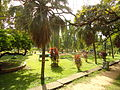 Subhash Bose Park Ernakulam Garden1.JPG