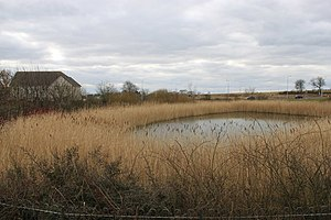 Sustainable drainage system - Suds pond with reed-bed near housing, Dunfermline, Scotland.