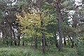 Suedliche Froettmaninger Heide Herbst Muenchen-23.jpg