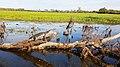 Sun-baking crocodile at Yellow Water Billabong.jpg