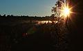 Sun in the woods - Public Domain.jpg