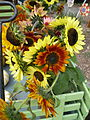 Sunflower Cart Freshwater CA.JPG