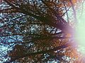 Sunny Day. Lindsey Abudei.© 2016.jpg