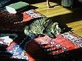 Sunny nap (299056797).jpg