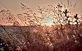 Sunset, Kefalonia (7975652139).jpg