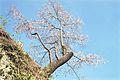 Taketa, Oita Prefecture 878-0013, Japan - panoramio.jpg
