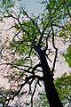 Tauersche Eichen 11.jpg