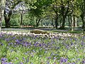 Templewood stone circle and bluebells. - geograph.org.uk - 178098.jpg