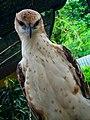 The Cool Eagle, 25112015.jpg