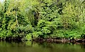 The River Bann at Castleroe near Coleraine - geograph.org.uk - 1884045.jpg