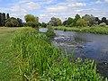 The River Loddon, Stratfield Saye - geograph.org.uk - 1386005.jpg