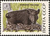 The Soviet Union 1969 CPA 3798 stamp (Wild Boar).jpg