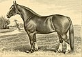 The breeds of live stock, and the principles of heredity (1887) (14778008481).jpg