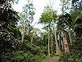 The mighty trees at the chidiyatapu botanical garden.jpg