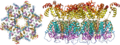 The structure of the immature HIV-1 capsid in intact virus particles.png