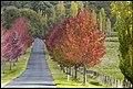 Those falling Autumn Leaves-2 (34494673135).jpg