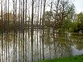 Tisza flooding.jpg