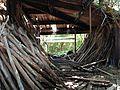 Tons of hardwoods found inside Ruins - panoramio.jpg