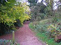 Track into Devilsden Wood, near Coulsdon, Surrey - geograph.org.uk - 608723.jpg