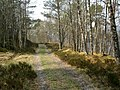 Track on the south side of Loch Beinn a Mheadhoin - geograph.org.uk - 170036.jpg
