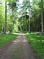 Track through the Forest of Dean - geograph.org.uk - 809183.jpg