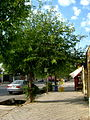 Trees near Railway station of Nishapur 1.JPG
