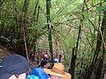 Trekking in Chiang Rai Province 2007-05 12.JPG