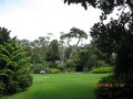 Tresco Abbey Garden - open view in the park.png