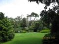 Tresco Abbey Garden - open view in the park.png