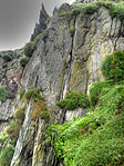 Tufted cliff (8045538380).jpg