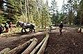 US Navy 060329-N-1683M-007 Logger Jerry Harpole stands watch over Mrs. Sarah Nell Davis as she leads the logging horse team members, Tom and Jerry.jpg
