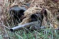 US Sniper Slunj.JPG