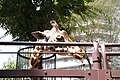 Ueno zoo, Tokyo, Japan (189832290).jpg