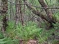 Umstürzende Bäume.jpg