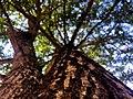Under tree.jpg