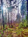 Valdaysky District, Novgorod Oblast, Russia - panoramio (3462).jpg