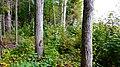 Valdaysky District, Novgorod Oblast, Russia - panoramio (3875).jpg