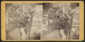 View of two men sitting on a bench, from Robert N. Dennis collection of stereoscopic views.png