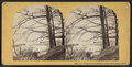 View on the Hudson, from Newburgh, N.Y, from Robert N. Dennis collection of stereoscopic views.png