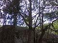 Vila de Cimbres - Pesqueira - PE - Crianças Brincam 05.jpg