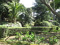 Villa Cimbrone17.JPG
