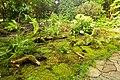 Waldlichtung im Garten.jpg