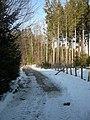Waldweg bei Blindham - geo.hlipp.de - 24117.jpg