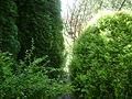 Warsaw. Powsin. Botanical Garden 201.JPG