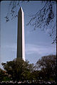 Washington Monument WAMO2339.jpg