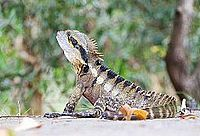 Water Dragon 001.jpg