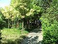 Weicheng, Weifang, Shandong, China - panoramio (83).jpg