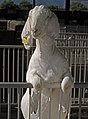 White Goat Standing.jpg
